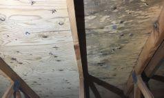 Eco-Jet - Décontamination entre-toit moisissure